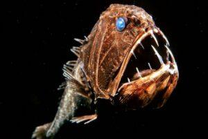 El pez ogro: uno de los animales abisales más terroríficos