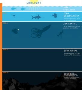 Zonas en las que se divide el océano. Los peces abisales viven en la zona batial-abisal.