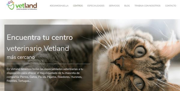 primera consulta para gatos gratis